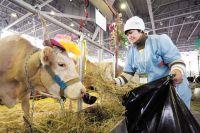 Сейчас вместо 20-30 доярок на фермах заняты максимум пять операторов машинного доения.