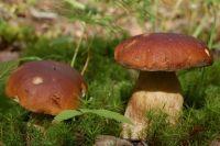 В лесах региона, по самым скромным подсчётам, зреют сотни тонн экологически чистых ягод и грибов.