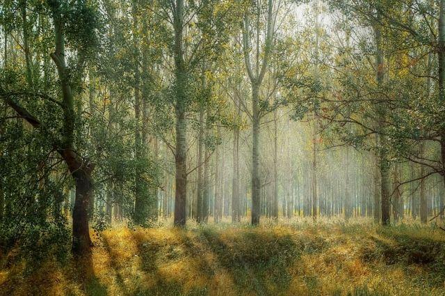 Жительница Лабытнанги ушла за грибами и 12 часов блудила по лесу