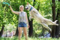 Перед поездкой с питомцем за город лучше заранее прийти в ветклинику и на основе советов специалиста сформировать индивидуальную аптечку для вашей собаки.