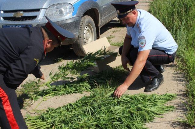 Запрещённые растения обнаружили полицейские во время очередного рейда в Чайковском районе.