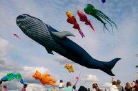 Его запустят во время шоу от создателей старейшего и крупнейшего фестиваля воздушных змеев в России.