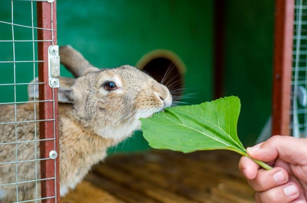 Кроликов можно покормить. Они осбенно любят лопухи.
