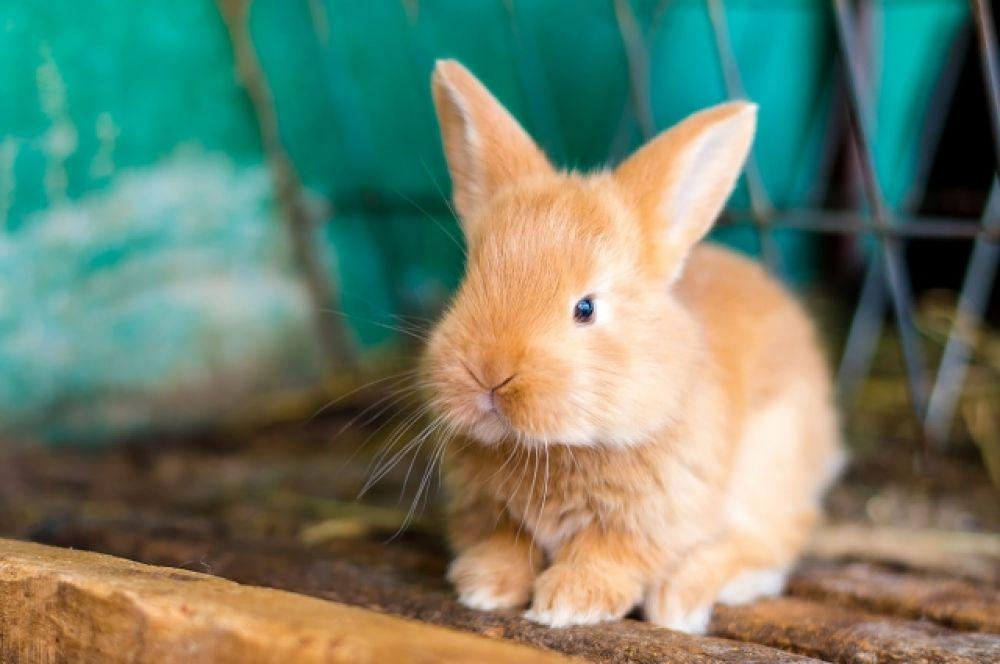 Один из маленьких крольчат.