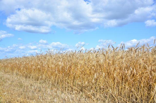 Гранты предоставляют на условии софинансирования. У фермера должно быть не менее 10% собственных средств, до 90% суммы добавит государство.