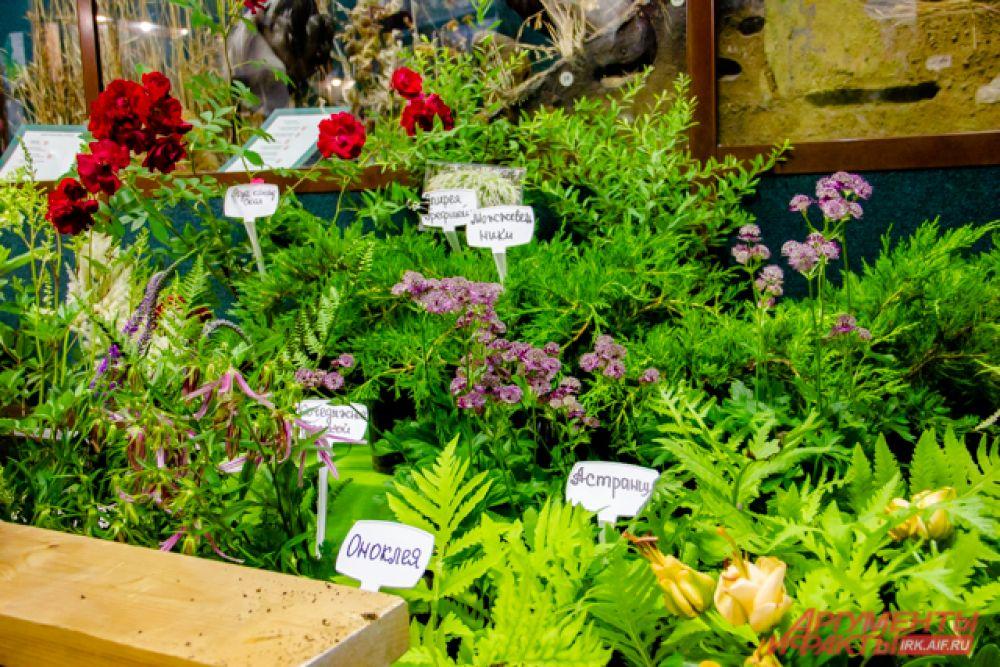 цены на розы варьируются от 500 до 100 рублей, на гортензии - от 500 рублей, на лилии - от 100 до 150, а на декоративные кустарники - от 150 до 1000