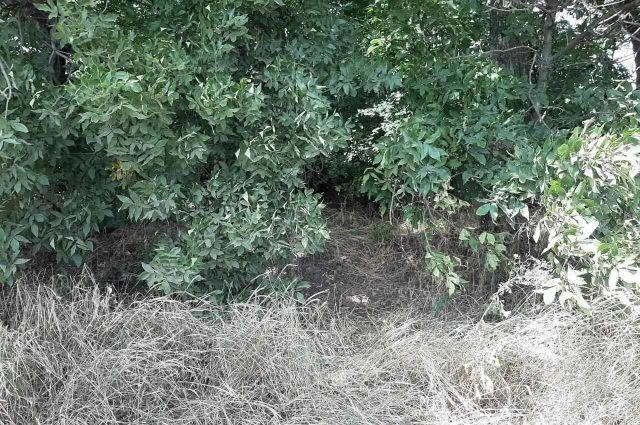 Труп девушки в лесополосе под Днепром: найден вероятный убийца, подробности