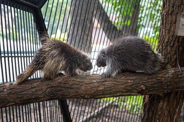 Новосибирский зоопарк постоянно расширяется: практически каждый месяц в него «переезжают» новые животные.