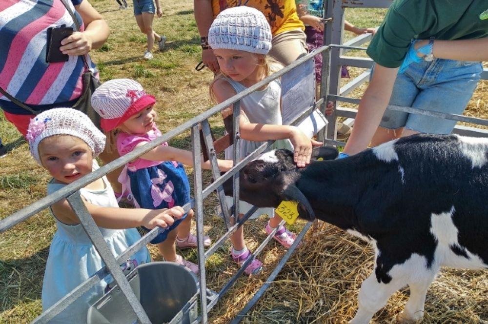 Дети смогли пообщаться с животными.