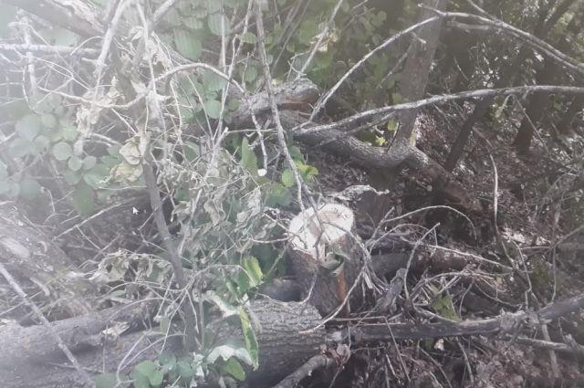 В Беляевском районе «черному лесорубу» грозит 4 года колонии