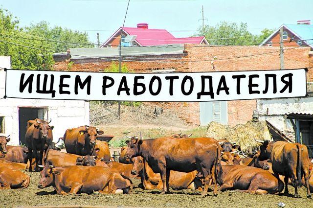 Из Саракташского района уходит работодатель 400 крестьян.