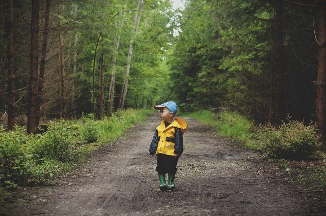 Омичка потеряла трёхлетнего сына в лесу, собирая ягоды