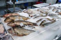 По микробиологическим показателям безопасности четыре пробы рыбной пробукции из 55 не соответствовали установленным требованиям.