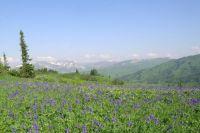 К 300-летию открытия Кузбасса в Междуреченском городском округе будет открыт первый в регионе природный парк «Поднебесные Зубья».