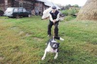 Список опасных пород собак, утвержденный правительством, обсудили тюменцы