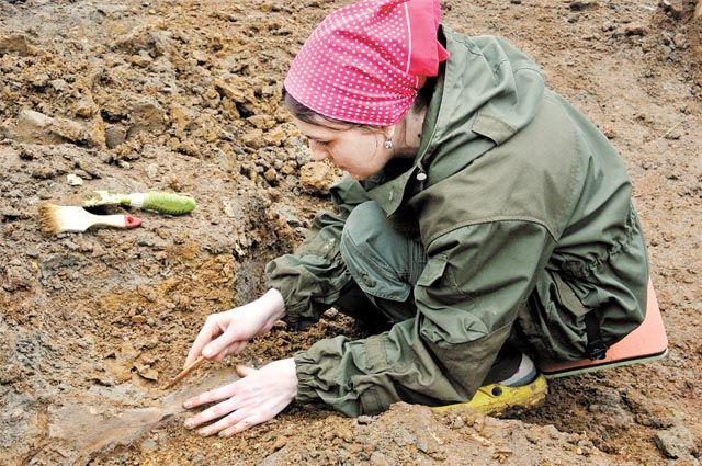 Сейчас специалисты мечтают найти фрагменты черепа доисторического слона.