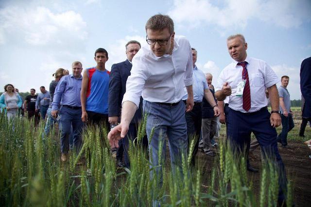 На «Дне поля» можно было увидеть новые сорта зерновых и кормовых культур.