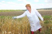 Декларирование зерна гарантирует его безопасность и качество.