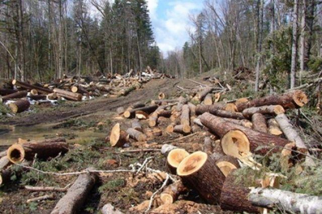 Площадь вырубленного леса составила 200 куб. м.