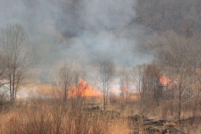 Более 500 человек брошены на помощь лесопожарным Красноярского края и Иркутской области