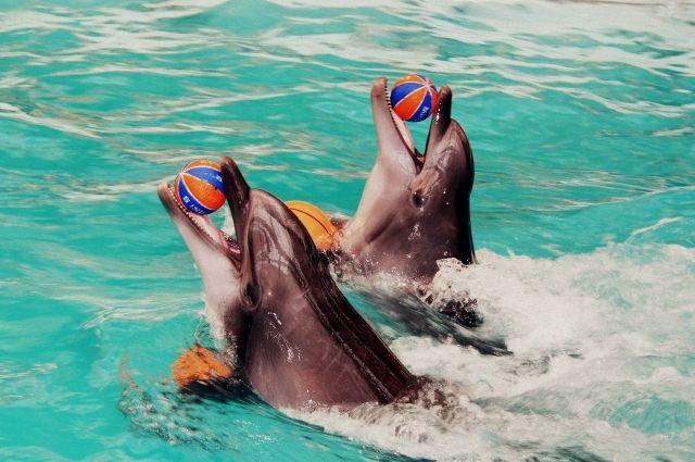 Красочное шоу ростовчане и гости города могут посмотреть в дельфинарии.