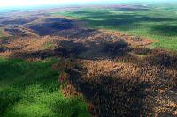Последствия лесных пожаров в Красноярском крае.