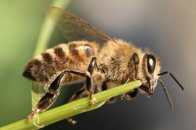 Тюменские аграрии заботятся о безопасности пчел
