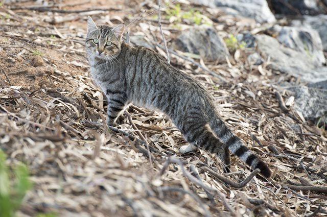 Зоозащитники пожаловались на музыкальную школу, в подвале которой замуровали 40 кошек.
