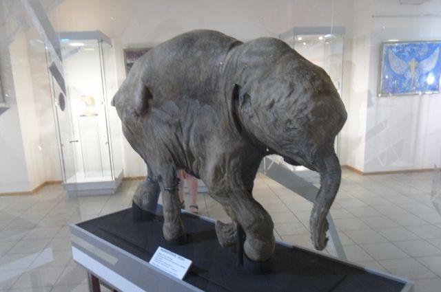 Мамонтенок Люба: возраст - около 1-3 месяцев, геологический возраст – 42 000 лет по радиоуглеродному датированию.