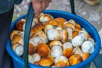 В некоторых местах грибы уже появляются.