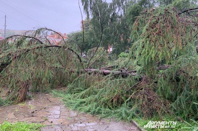 Деревья перегородили проезжую часть и повредили автомобили.