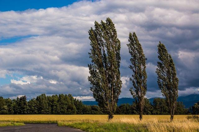 Ураганный ветер повалил деревья в Ижевске