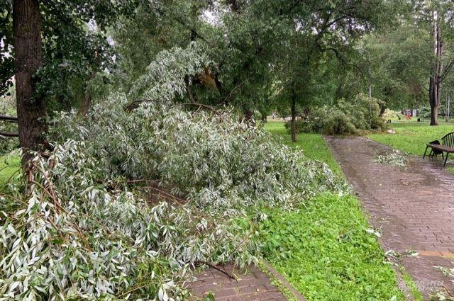 Упавшие деревья должны убрать в течение суток.