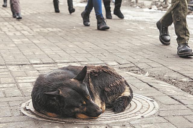 Бездомная собака застряла в ливневой канализации.