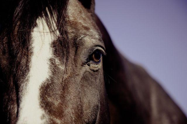 В Александровском районе 4-летняя малышка пострадала, упав с лошади