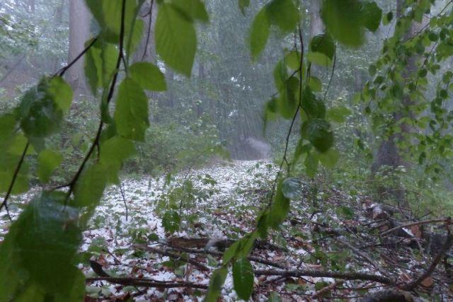 ВБрянске объявили предупреждение из-за грозы иураганного ветра