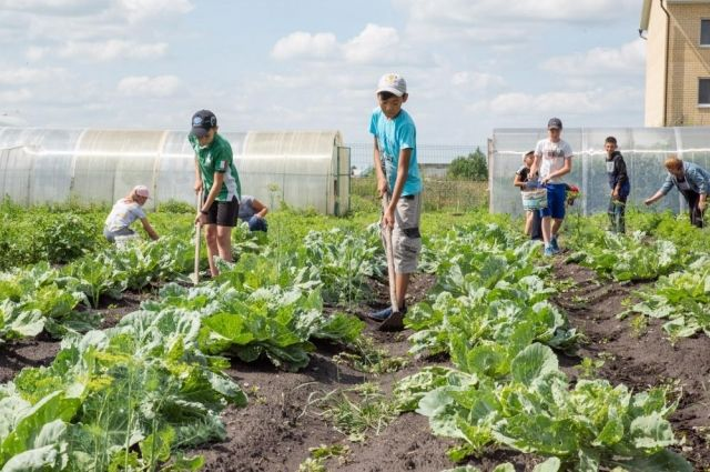 Александр Моор побывал на школьном огороде в Омутинском
