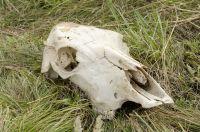 Данный скотомогильник законсервирован и не эксплуатируется.