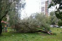 То самое злополучное дерево, которое до сих пор не убрали.