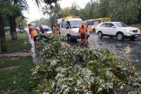 В Киеве после мощного ливня повалены деревья и затоплены улицы