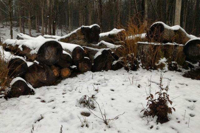 Госинспектора агентства по охране лесов обвиняют в превышении полномочий
