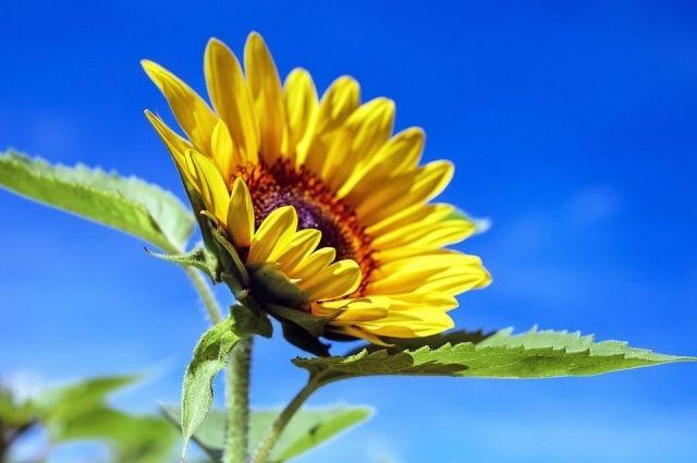 МЧС: в Оренбуржье на выходных ожидаются сильный ветер и жара