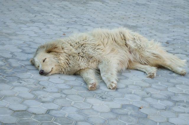 Собаке нужна помощь ветеринара.