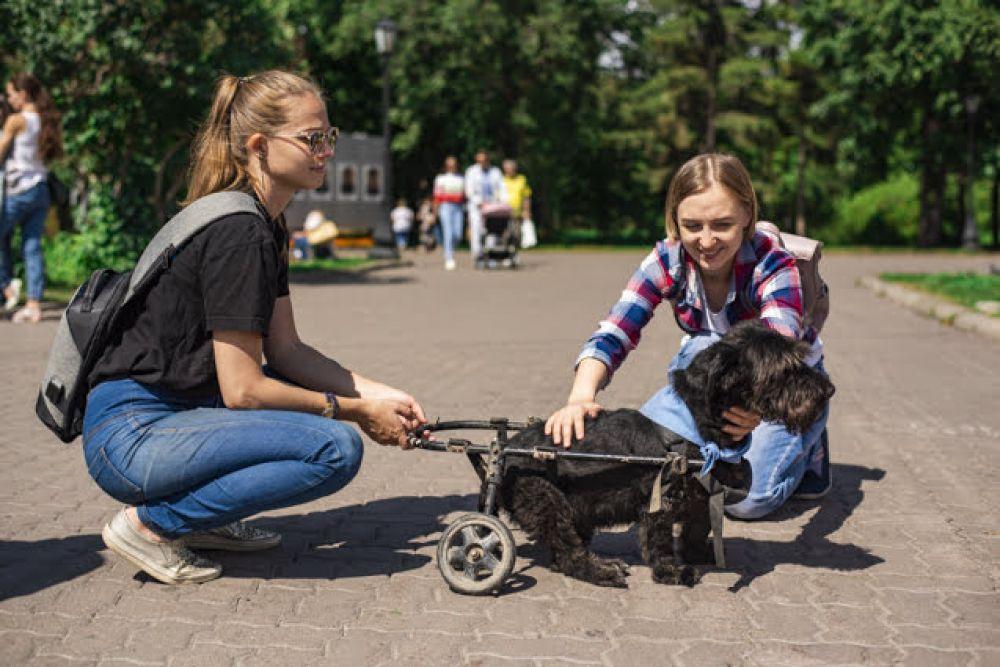Акция в парке растопила сердца многих новосибирцев. И некоторые животные, наконец, нашли дом.
