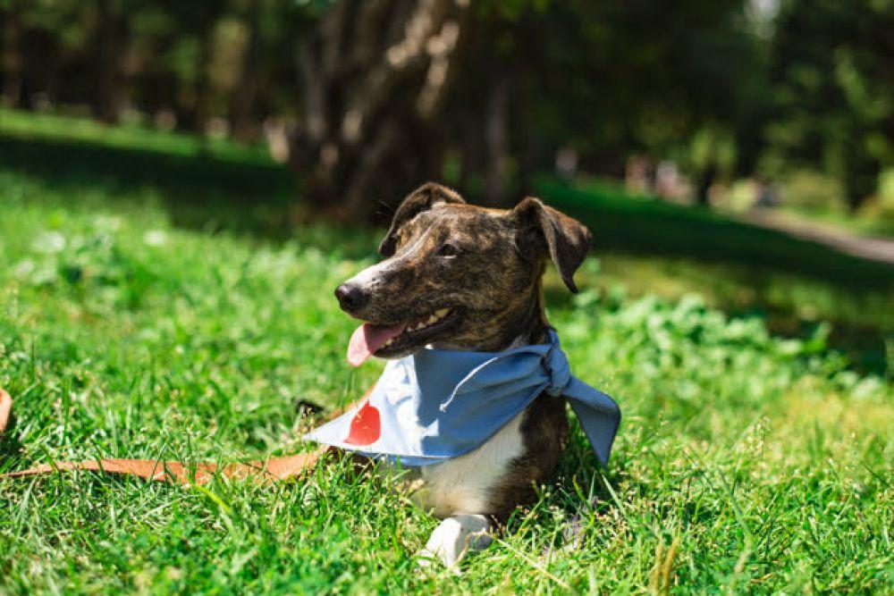 """На каждой собаке красовался яркий платочек с трогательной надписью """"Хочу домой""""."""