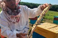 В этом году - хороший урожай мёда.