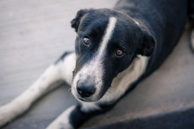 В прошлом году за один день волонтеры вывели на прогулку 800 собак.
