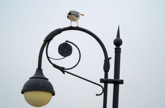 Чайка и фонарь - герои фотосюжета.