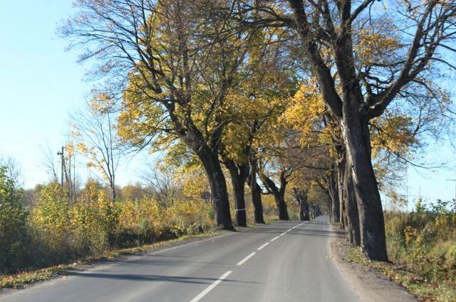Дороги Калининградской области проверяют на риск возникновения ДТП