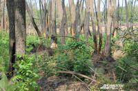 Под видом пожара могут скрывать незаконную вырубку